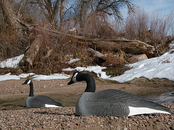 goose decoys at South Platte River